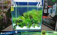 03aquascaping