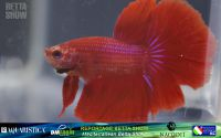 16_napoli_aquatica_betta