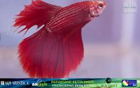 19_napoli_aquatica_betta