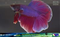 21_napoli_aquatica_betta